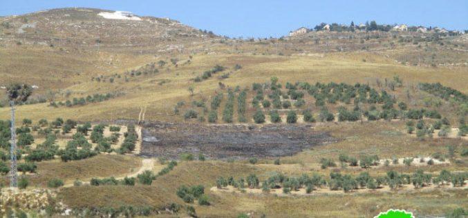 """مستعمرو مستعمرة """" يتسهار"""" يضرمون النيران في الأراضي الزراعية في بورين"""