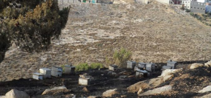 Israeli Occupation Forces set fire to agricultural lands south Hebron