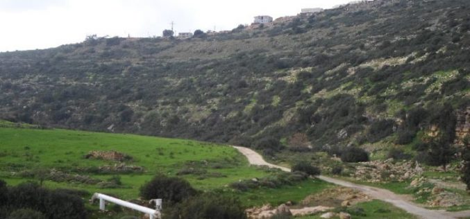 Israeli Occupation Forces uproot 120 olive trees in Salfit governorate