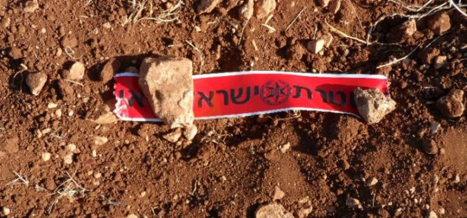 Adi Ad colonists destroy 12 olive saplings in the Ramallah village of Turmus'ayya