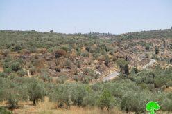 المستعمرون يضرمون النيران في حقول الزيتون غرب قرية رأس كركر