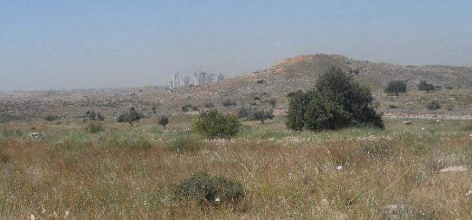 "An Israel military order to declare 1148 dunums from Salfit as ""State Property"""