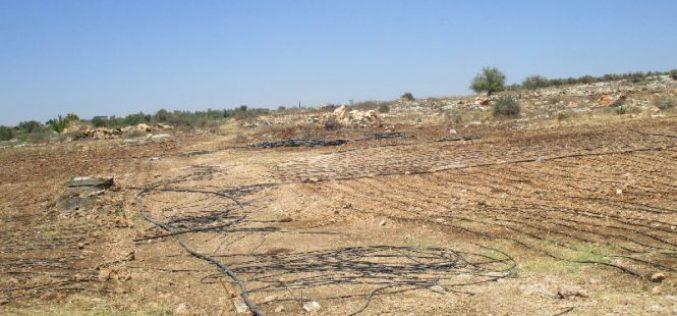 Israeli Occupation Forces destroy irrigation network in Qalqiliya