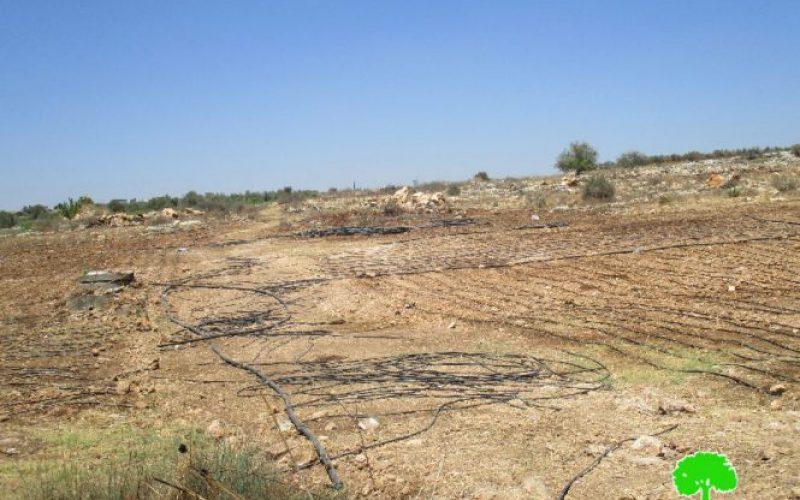 Israeli Occupation Forces destroy irrigation network in Qalqiliya