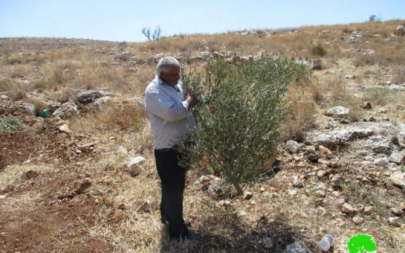 Israeli Occupation Forces uproot trees and demolish retaining walls in Tulkarm governorate