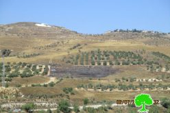 Yizhar colonists set  fire to agricultural lands in Nablus
