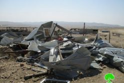 Israeli Occupation Forces demolish Al-Mleihat and Arab Al-Zayed Bedouin communities in Jericho governorate