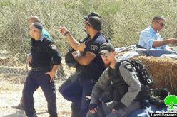 جرافات الاحتلال تهدم إسطبل لتربية الخيول في حي الصلعة في جبل المكبر