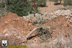 Land Leveling in Wadi Fukin village West of Bethlehem Governorate