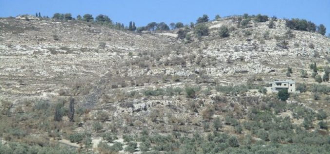 Israeli Occupation Forces torch agricultural lands in the Nablus town of Burqa