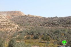 Betar Illit colonists torch 60 trees in Bethlehem village of Husan