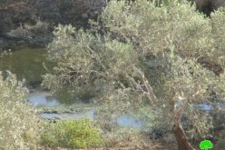 """مستعمرو مستعمرة """" بدوئيل"""" يواصلون ضخ مياه الصرف الصحي باتجاه أراضي بلدة كفر الديك"""