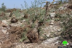 الاحتلال يجرف 38 دونماً من أراضي بلدة خاراس غربي الخليل