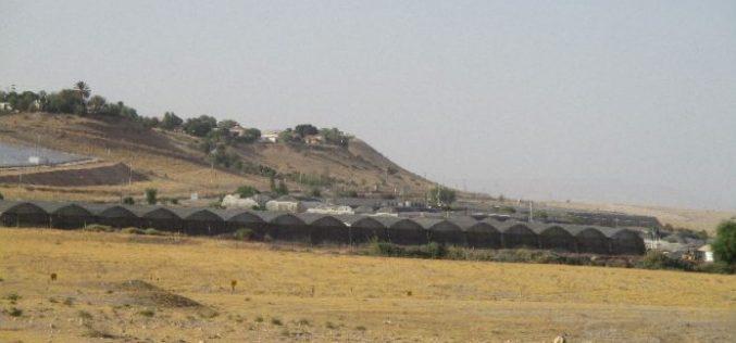 """الإعلان عن مخطط تنظيمي جديد لمستعمرة """" مخولا"""" لنهب المزيد من أراضي قرية بردلة"""
