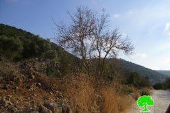 ما تسمى بحماية الطبيعة الإسرائيلية تسمم بالمواد الكيمائية أشجار زيتون واد قانا ..؟!