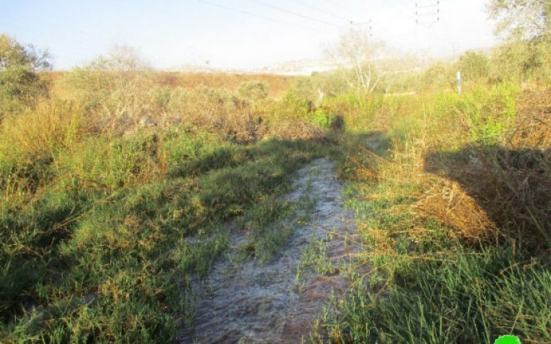 في موسم قطاف الزيتون … الاحتلال يتعمد إغراق مساحات كبيرة من أشجار الزيتون قرية مردا بالمياه