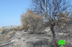 جيش الاحتلال الإسرائيلي يتسبب في احراق 250 شجرة زيتون في خربة جبارة