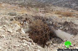 """تدمير 870 شجرة زيتون وهدم بئراً في """"خلة الضبع"""" شرق يطا"""