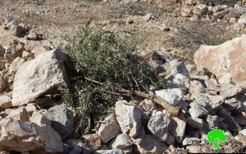 الاحتلال يجرف 28 دونماً من الأراضي الزراعية في بيت أولا غرب الخليل