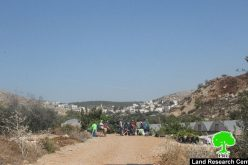 Betar Illit colonists break into agricultural pools and lands  in Bethlehem