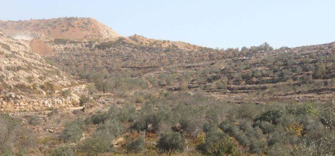 مستعمرون يحرقون 60 شجرة في  قرية حوسان بمحافظة بيت لحم