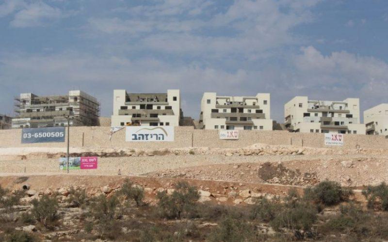تقرير الانتهاكات الإسرائيلية في الأراضي المحتلة – تشرين الاول 2016  اعتداءات المستوطنين تتصاعد… واشجار الزينون تحرق