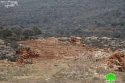 The Israeli occupation army uproots 250 seedlings in Qalqiliya governorate