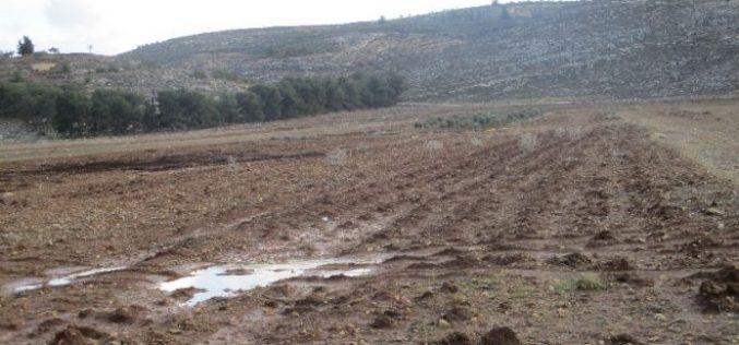 """اقتلاع 200 غرسة زيتون على يد مستعمري """" عادي عاد"""" في قرية ترمسعيا"""