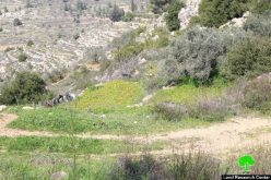 The Israeli occupation to purchase five dunums from the Bethlehem village of AL-Walaja