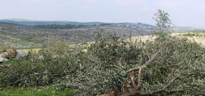 تجريف أراضي واقتلاع أشجار في بلدة خاراس غرب الخليل