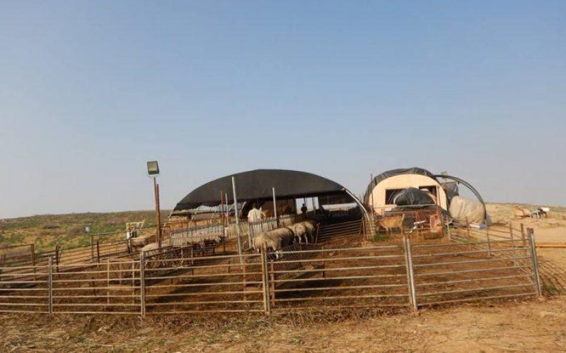الاحتلال يشرع بإقامة بؤرة استعمارية جديدة في الأغوار الشمالية