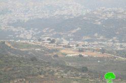 """مستعمرو """"رحاليم"""" يتلفون 139 شجرة زيتون في قرية الساوية"""