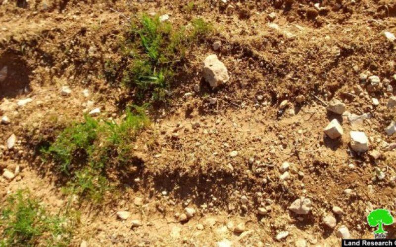 مستعمرون يرشون مزروعات بالمبيدات السامة في قرية التواني شرق يطا