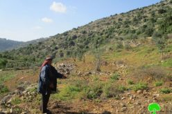 Israeli authorities order agricultural lands evacuated in Wad Qana area