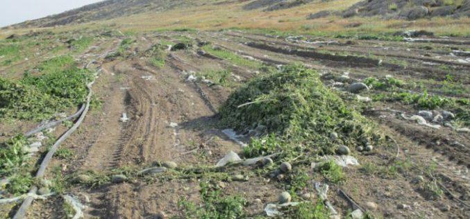 تجريف 18 دونماً من الأراضي الزراعية واقتلاع 420 غرسة نخيل شمال قرية الزبيدات