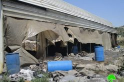 Israeli Occupation Forces confiscate 60 tons of charcoal and demolish workshop in Jenin city