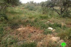 ضخ المياه العادمة على أراضي قرية بيت تعمر/ محافظة بيت لحم