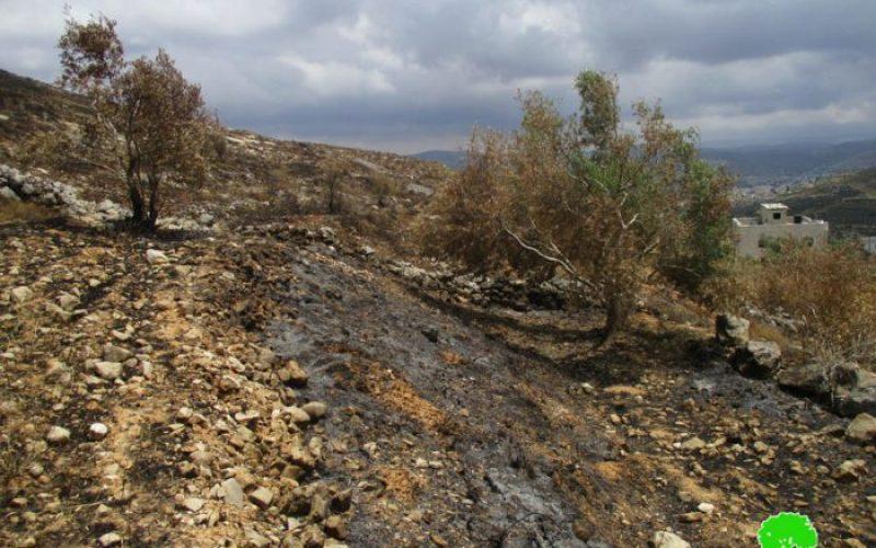 """مستعمرو """" جفعات رونين"""" يحرقون عشرات الزيتون المعمّر شمال قرية بورين"""
