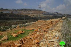 خلع 12 شجرة زيتون من جذورها وسرقتها في وضح النهار من أراضي قرية بروقين