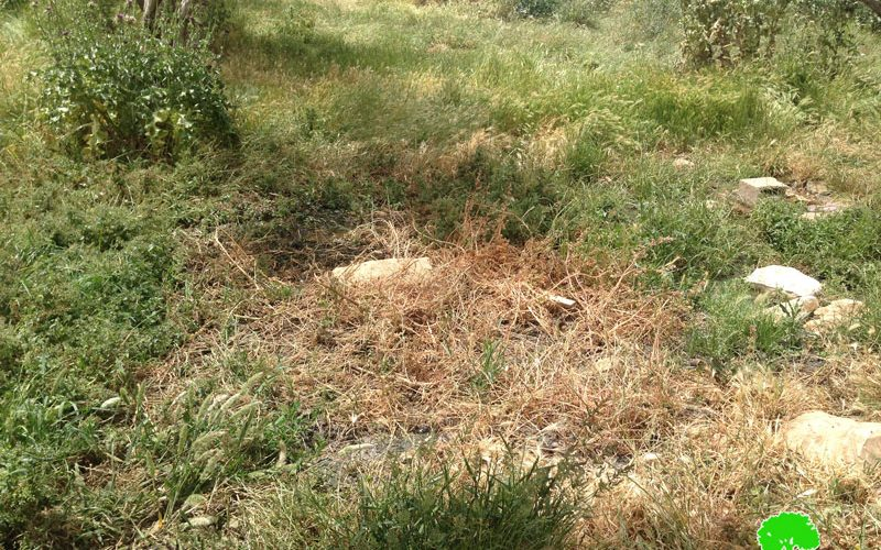Israel pumps sewage water into lands of Bethlehem