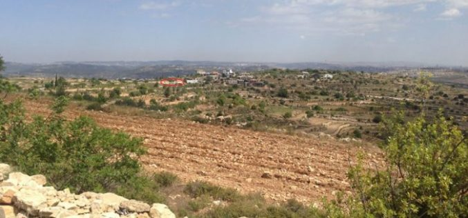 Sidi Bo'az colonists ravage agricultural land in Bethlehem city