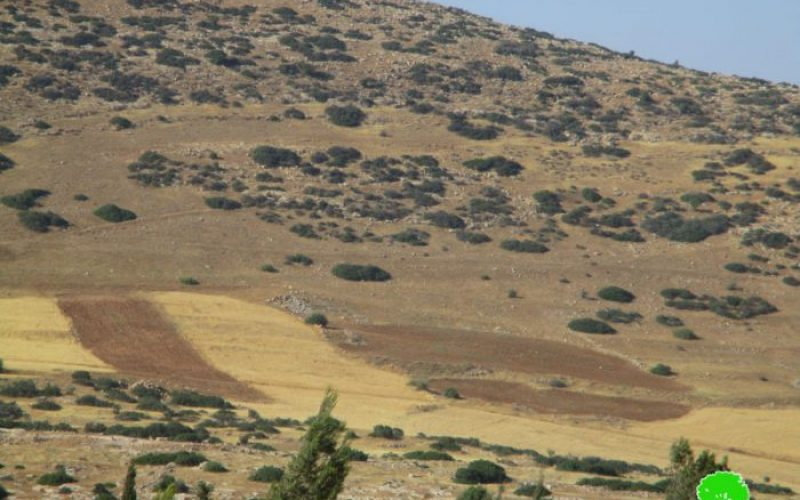 Israeli Occupation Forces uproot 70 olive trees and demolish fences in Tubas city