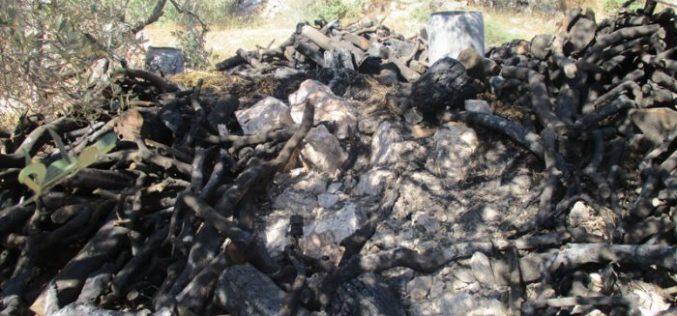 هدم عدد من ورش إنتاج الفحم ومصادرة أطنان من الحطب في بلدة يعبد