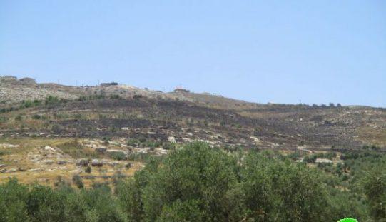 """مستعمرو """"يتسهار يحرقون أكثر من مائتي شجرة زيتون في قريتي بورين وحوارة / محافظة نابلس"""