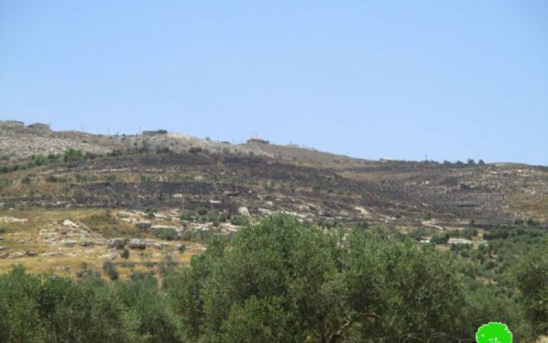 Yizhar colonists burn down 200 olive trees in the Nablus villages of Burin and Huwwara