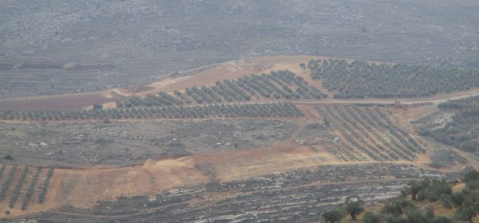 Shilo colonists ravage vast area west Qaryut village in Nablus governorate