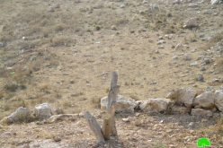 إتلاف 16 شجرة زيتون في قرية كفر قليل / محافظة نابلس