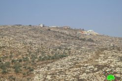 سرقة ثمار 45 شجرة زيتون في قرية المغير في موسم القطاف / محافظة رام الله