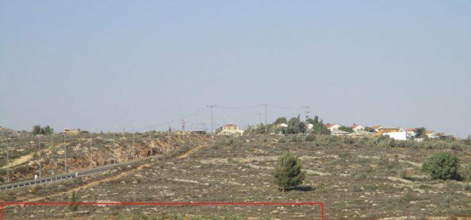 """مستعمرو """" رحاليم"""" يقطعون 42 شجرة زيتون في قرية الساوية بمحافظة نابلس"""