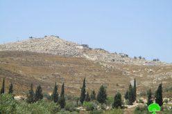 سرقة ثمار زيتون جديدة على يد المستعمرين في قرية بورين / محافظة نابلس